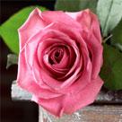 blomst_136x136